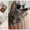 Photos: なごみ猫カレンダーに載りました♪