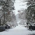 Photos: 雪の角館