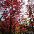 土津神社の紅葉