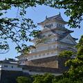 新緑に映える漆喰の白鷺城