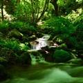 木谷沢渓流散策