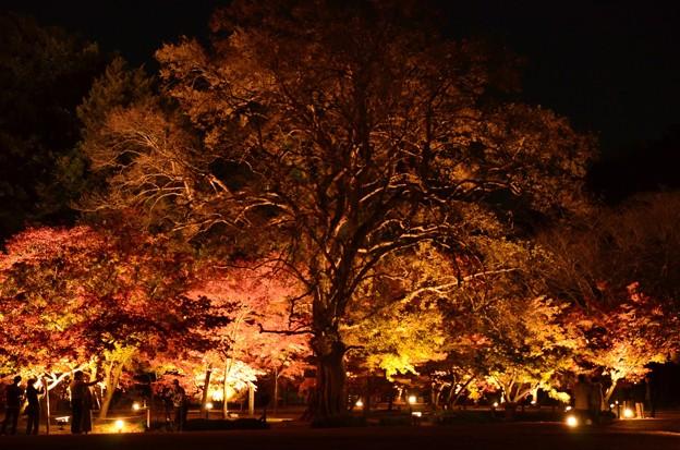 巨木の下で 岡山後楽園