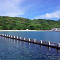 写真: 母島の朝 1