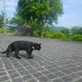 広島県で一番有名な黒猫ケンちゃん。