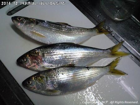 2014-12-19お魚はいっぱいいるんだけど・・・ (6)