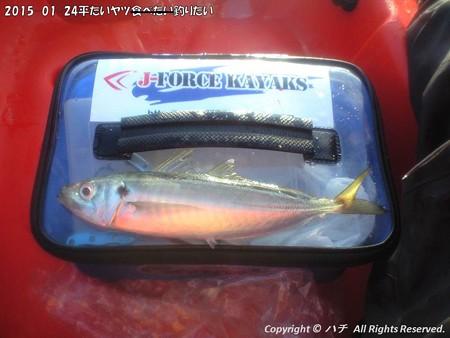 2015-01-24平たいヤツ食べたい釣りたい (6)
