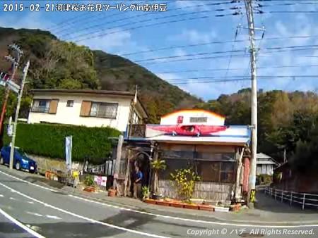 2015-02-21河津桜お花見ツーリングin南伊豆 (25)