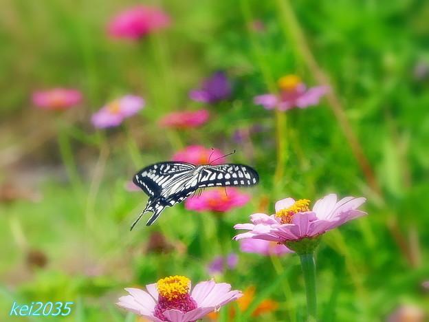 蝶の飛翔 NO.3