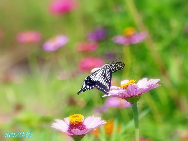蝶の飛翔 NO.2