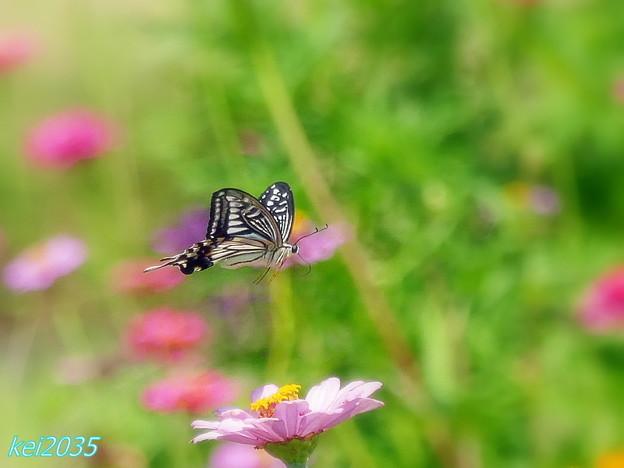蝶の飛翔 NO.1