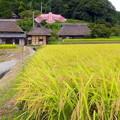 写真: 山里の秋NO.4