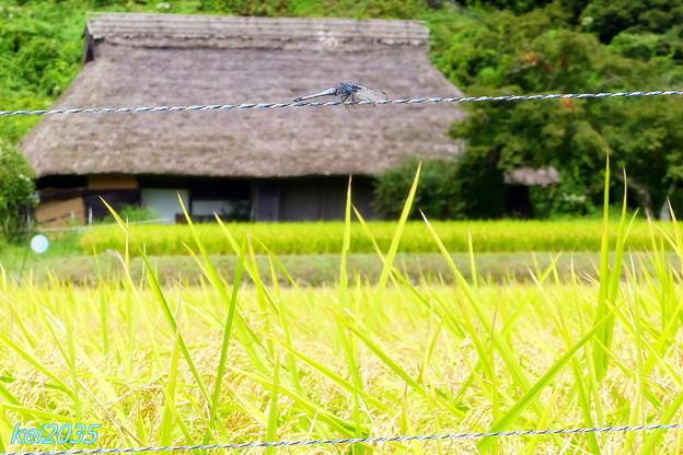 写真: 山里の秋NO.1