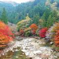写真: 奥津渓の紅葉