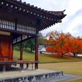 旧閑谷学校・カイノキの紅葉