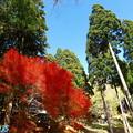 菩提寺の紅葉