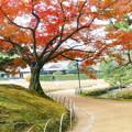 岡山後楽園の紅葉 NO.3
