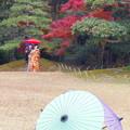 岡山後楽園の紅葉 NO.11