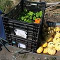 写真: 野菜運び
