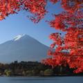 紅葉と富士 2014
