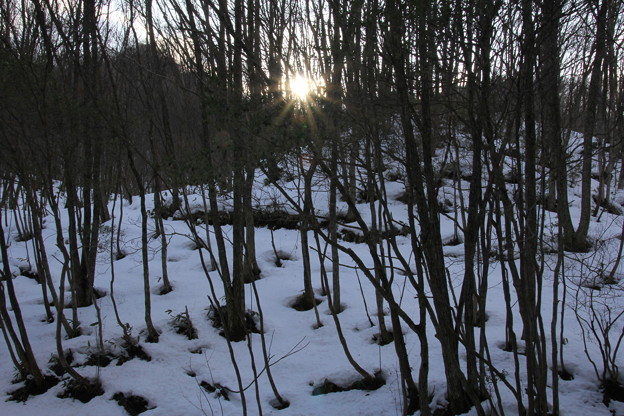 雑 木 林