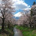 Photos: 富士山と桜@忍野 RAW