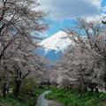 忍野の春 JPEG