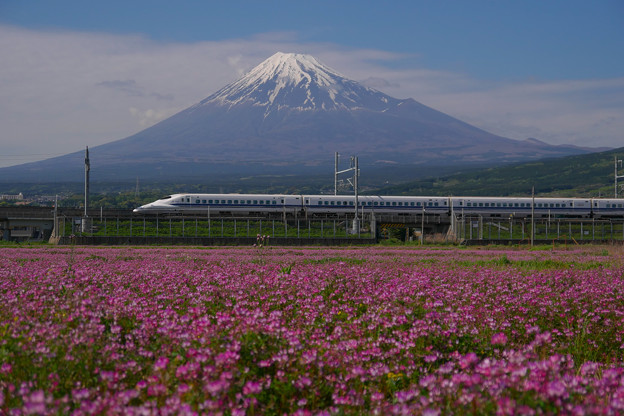 レンゲと富士山 700系