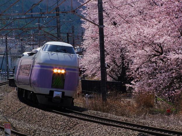 桜とスーパーあずさ