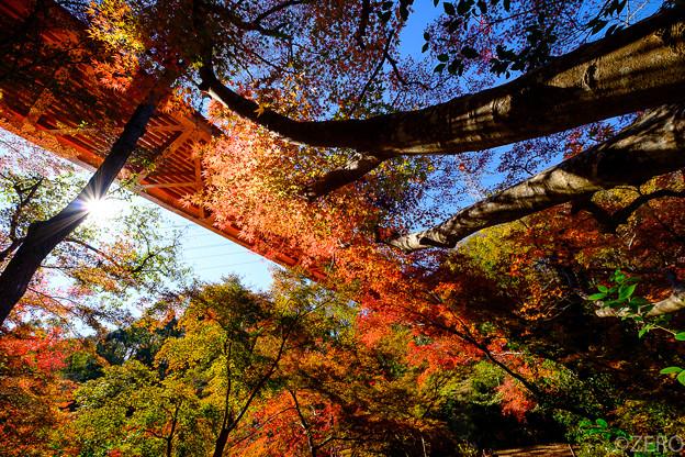 泉自然公園-7540
