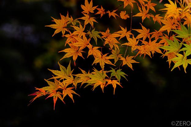 成田山公園-7595