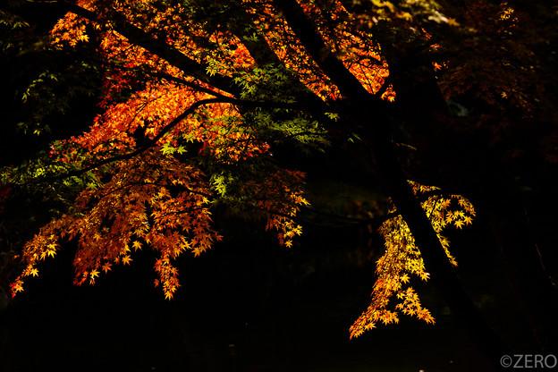 成田山公園-7626