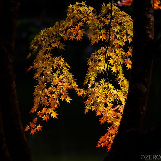 成田山公園-7634