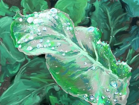 ブロッコリーの葉についた水滴