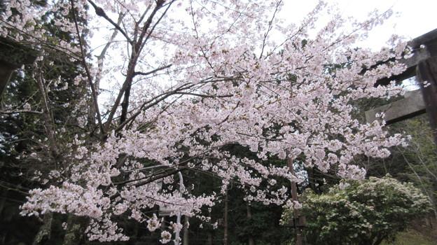 Photos: 吉野神宮(奈良県吉野町吉野山)