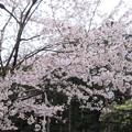 吉野神宮(奈良県吉野町吉野山)