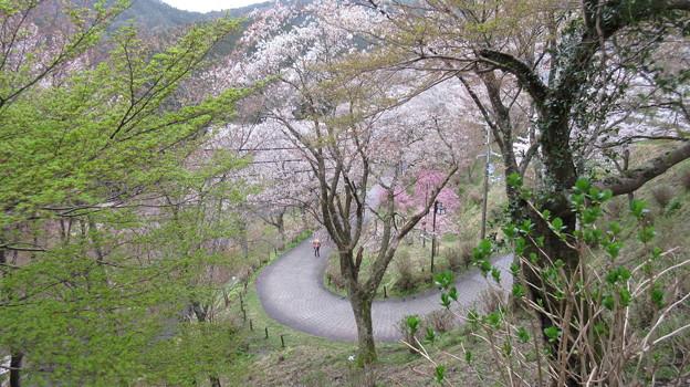 七曲坂(吉野町吉野山)
