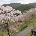 写真: 七曲坂(吉野町吉野山)