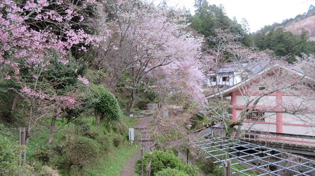 Photos: 如意輪寺(吉野町吉野山)
