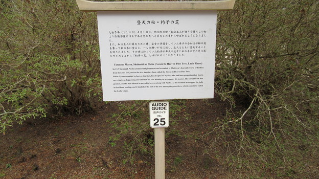 高野山壇上伽藍(高野町)登天の松と杓子の芝