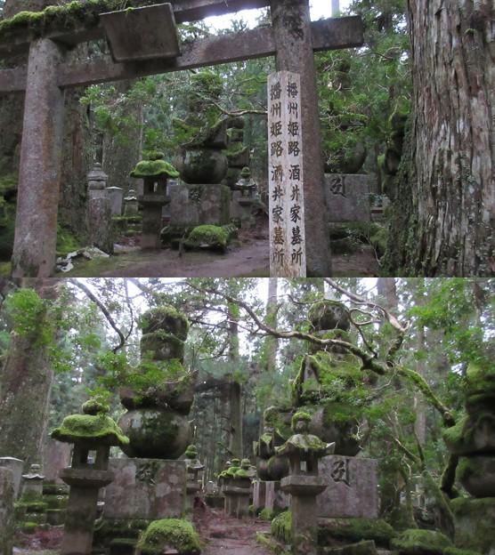 高野山金剛峯寺 奥の院(高野町)播州姫路酒井家墓所