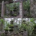 Photos: 高野山金剛峯寺 奥の院(高野町)播州姫路酒井家墓所