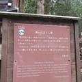 Photos: 高野山金剛峯寺 奥の院(高野町)興山応其上人廟