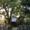 Photos: 大雄寺(台東区)