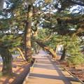 写真: 御穂神社(清水区)神の道