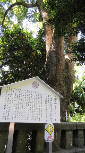 久能山東照宮/久能山城(駿河区)神廟・金の成る木