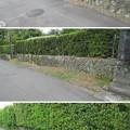 Photos: 田中城(藤枝市)石垣