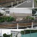 Photos: 田中城(藤枝市)三日月堀・清水御門