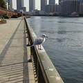 Photos: 13.03.23.隅田川(中央区築地6丁目)