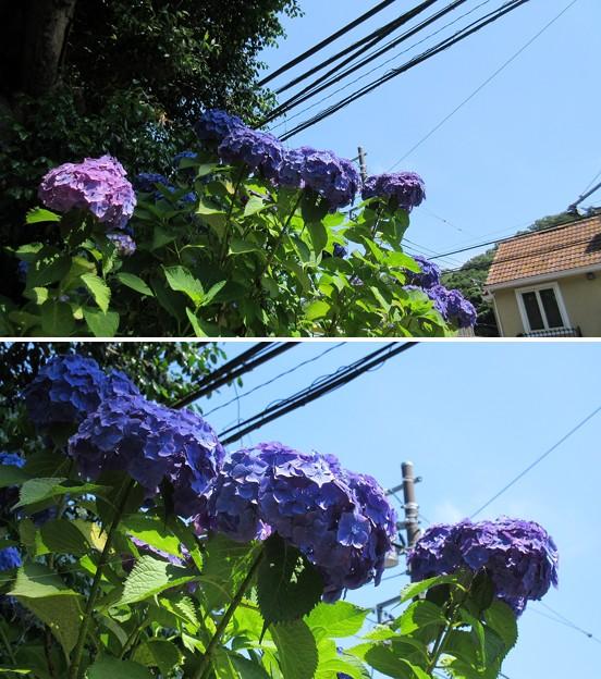 17.06.19.長寿寺(鎌倉市)