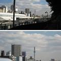 Photos: 天王寺五重塔跡(都立谷中霊園)近くより遠景